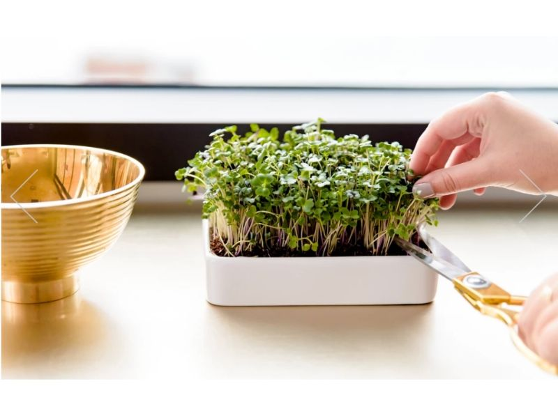 eco friendly gift ideas for anyone micro green grow kit