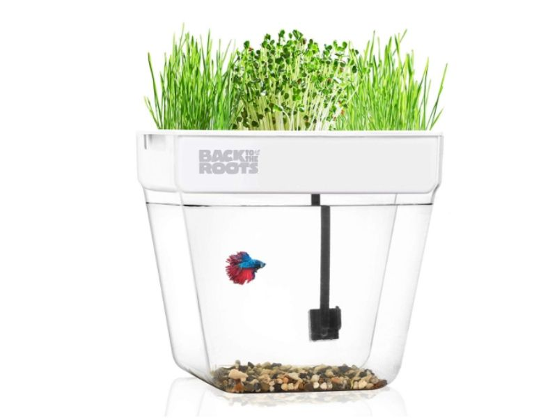 non toxic kids gift ideas water garden